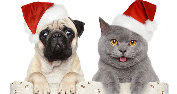 Keep your pets safe this Christmas | Swan Hill Rural City Council