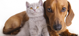 Calling all pet owners – tell us your views