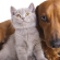 Robinvale residents – microchip your pet for free!