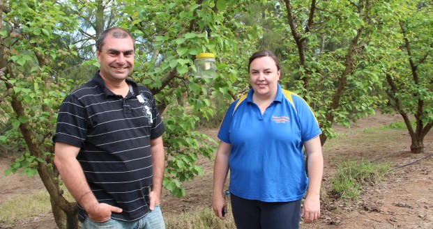 Joint campaign to tackle fruit fly in towns