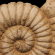 Gallery: Fossil display and workshop