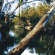 Conference to focus on shaping Loddon Mallee future