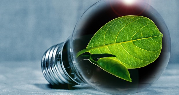 Councils join for green energy and bill savings
