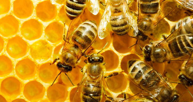 Pint-Size Scientists – Bees